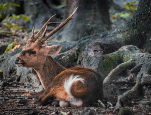 Dernières avancées et réflexions sur le bien-être animal